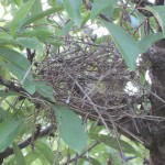 Hedge Nest 3